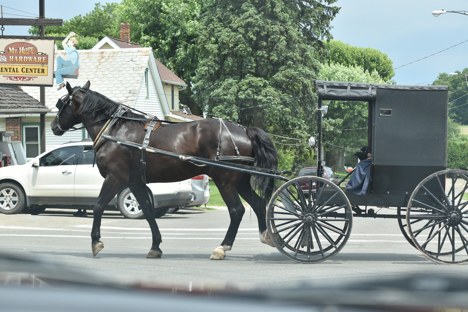 horse pulling a buggy